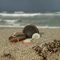 Beach Treasures 1 by Kimberly Mohlenhoff