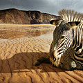 Beach Zebra by Carlos Caetano