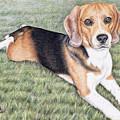 Beagle by Nicole Zeug