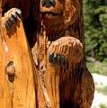 Bear On Trail by LeeAnn McLaneGoetz McLaneGoetzStudioLLCcom