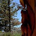 Bear Watch by LeeAnn McLaneGoetz McLaneGoetzStudioLLCcom