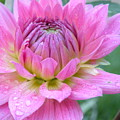 Beautiful Flower In Daybreak by Christine Belt