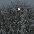 Beautiful Moon by Sonali Gangane