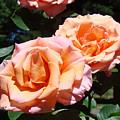Beautiful Pink Orange Rose Flowers Garden Baslee Troutman  by Baslee Troutman