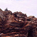 Beavertail Rock Formations by Ashley Knowles