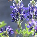 Bee In My 'bonnet by Amber Stubbs