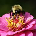 Bee Nice by Annie Babineau