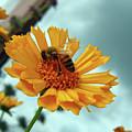 Bee Nice by Joy Tudor