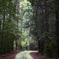 Beidler Forest by Donna Bentley