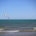 Being One With The Gulf - Soaring by Lucyna A M Green