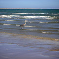 Being One With The Gulf - Wading by Lucyna A M Green