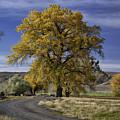 Belfry Fall Landscape 5 by Roger Snyder