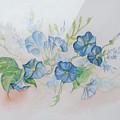 Bermuda Morning Glories by Phyllis OShields