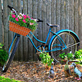 Bicycle Garden by Perry Webster