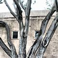 Big Branch by Greg Sharpe