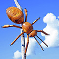 Big Bug Sculpture 1 by Andee Design