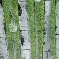 Birch - Green 1 by Jacqueline Athmann