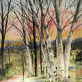 Birch Trees On Canvas by Diane Ziemski