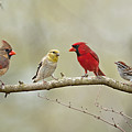 Bird Congregation by Bonnie Barry