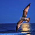 Bird In Moonlight by Peg Runyan