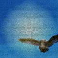 Bird In The Sky by Robin Hernandez
