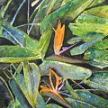 Bird Of Paradise 2 by Derek Mccrea