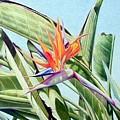 Bird Of Paradise by Constance Drescher