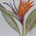 Bird Of Paradise by Donna Walsh