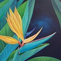 Bird Of Paradise by Elsa Gallegos