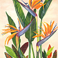 Bird Of Paradise by SheRok Williams