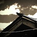 Bird On My Garage by Lenore Senior
