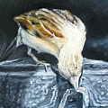 Bird Original Oil Painting by Natalja Picugina