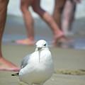 Birds Eye View by Scott Rhoads