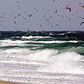 Birds Feeding Frenzy by Matt Suess