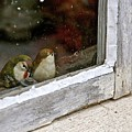 Birds In A Window by Lori Leigh