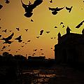 Birds In Flight At Gateway Of India by Photograph by Jayati Saha