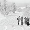 Birkebeiner Ski Trail by Dan McMahon