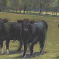 Black Angus Buddies by Terri  Meyer