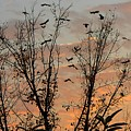 Black Birds At Sundown by Caroline  Urbania Naeem