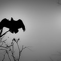 Black Buzzard 2 by Teresa Mucha