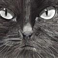 Black Cat Charcoal Drawing by Joshua Hullender