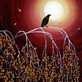 Black Crow On White Birch Branches by Laura Iverson