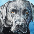 Black Lab by Christopher Shellhammer