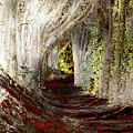 Blood Redwoods by Karen  W Meyer