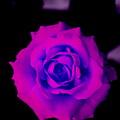 Bloom N Love by Debbie May