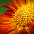 Blooming by Lutz Baar