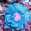 Blue by Evan Pullins