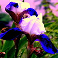 Blue Flowers by Aron Chervin
