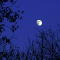 Blue Moon Among The Tree Tops by Andee Design