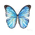 Blue Morpho Butterfly by Fran Henig